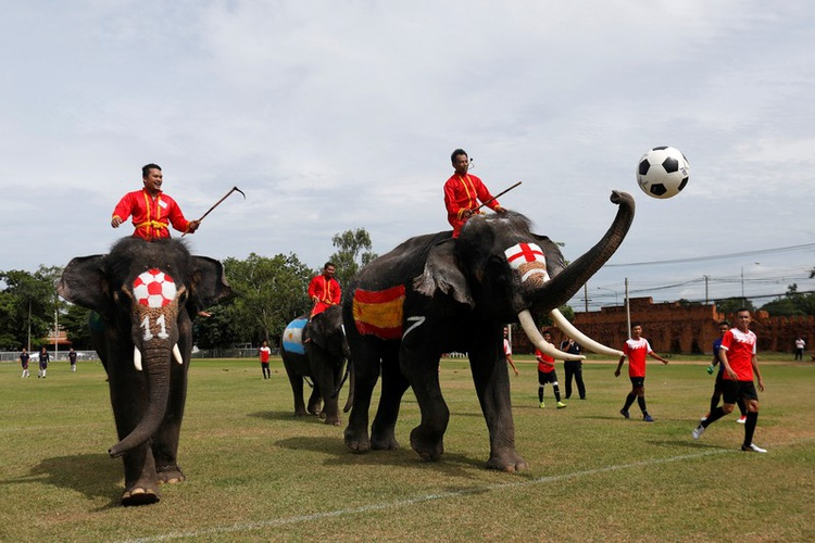 SPORTS-US-SOCCER-WORLDCUP-THAILAND-ELEPHANTS