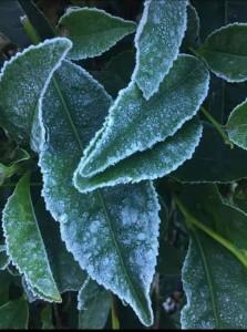 Munnar snowfall (6)
