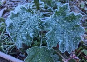 Munnar snowfall (8)
