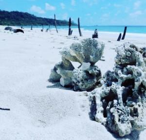 Unique times andaman and nicobar island port blair travel (2)