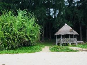 Unique times andaman and nicobar island port blair travel (5)