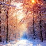 https://uniquetimes.org/wp-content/uploads/2019/01/winter-snow-falls-munnar.jpg